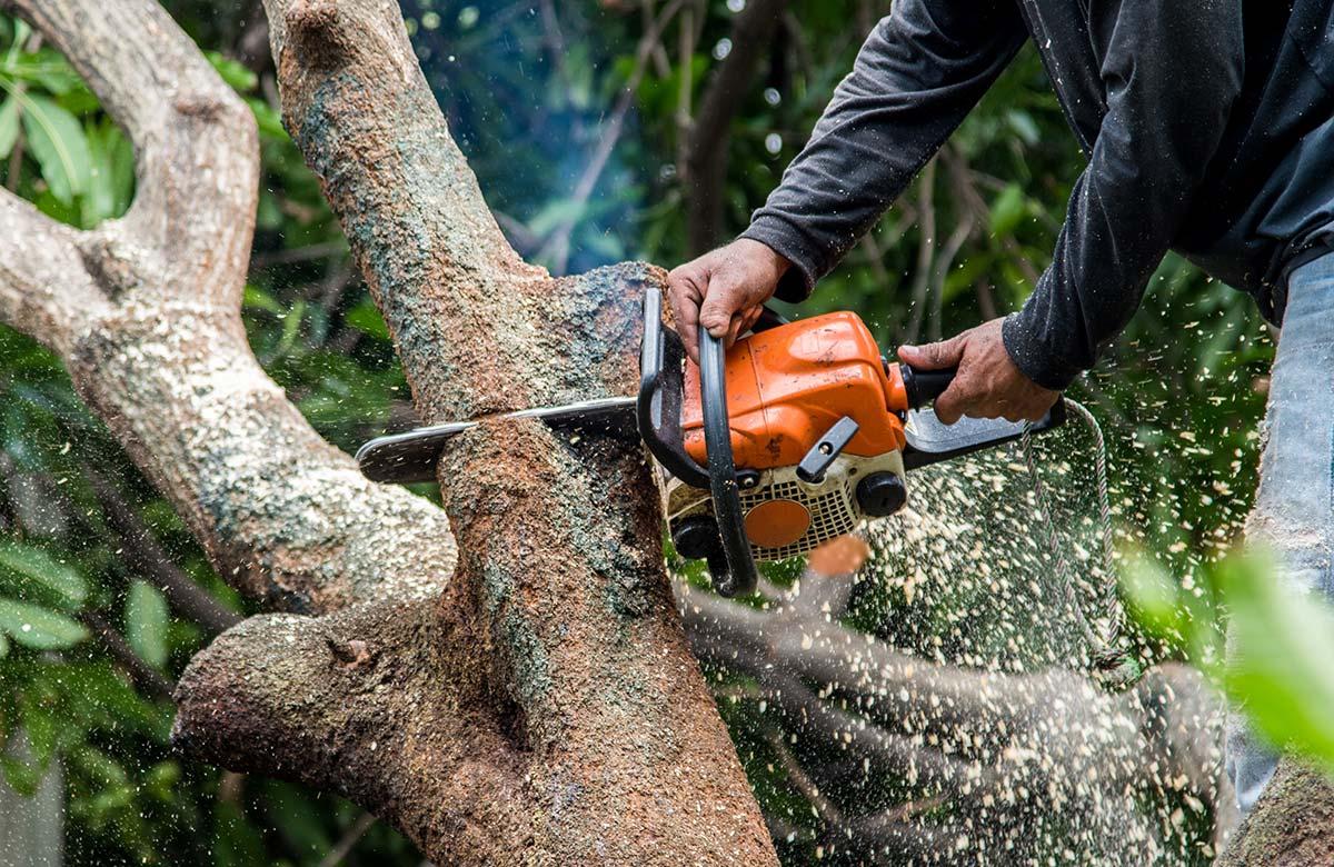Baumpflege Zuschnitt Ast