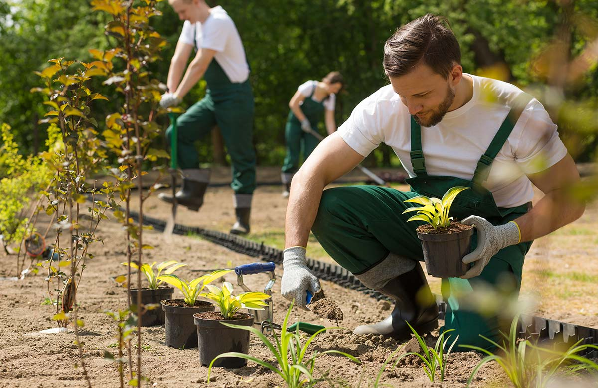 Gartenbau Bepflanzung Beete