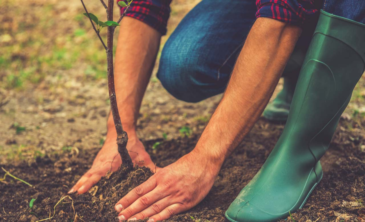 Gartenbau Kaufbeuren Bayern