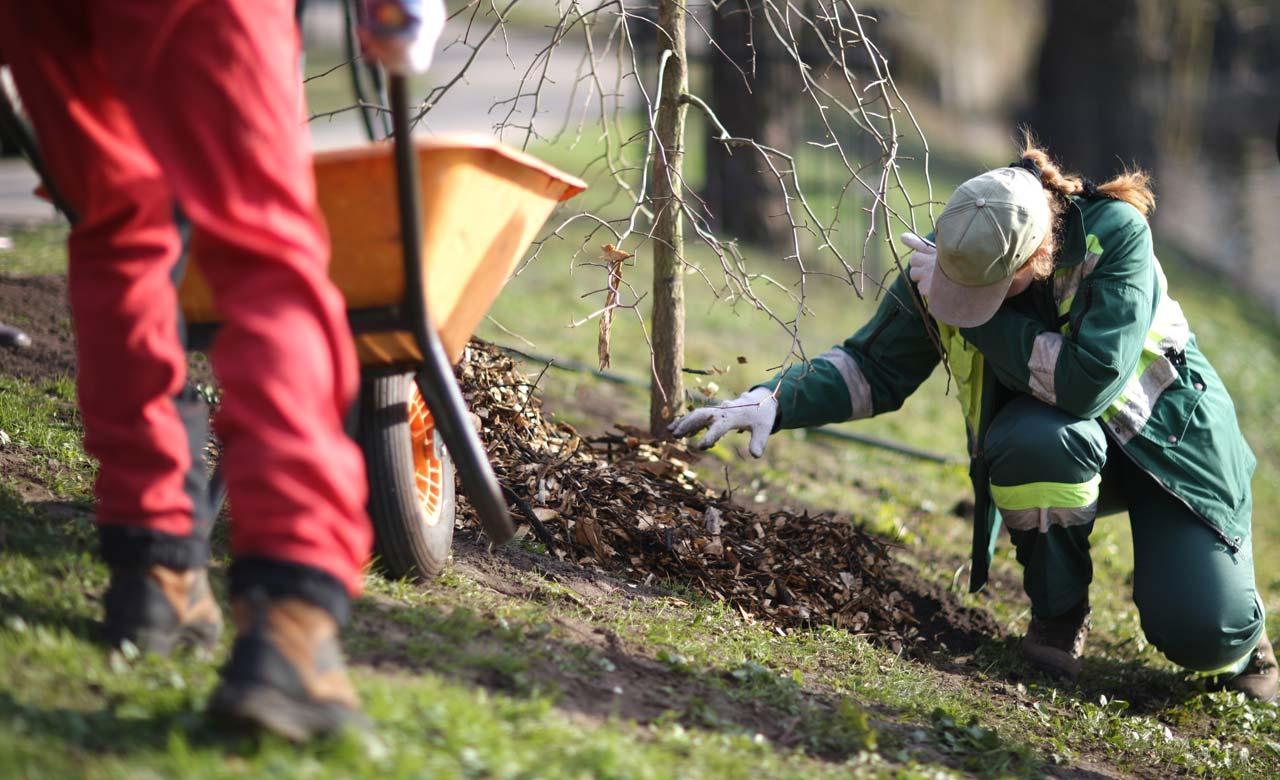 Gartenbau Leimen Baden-Württemberg