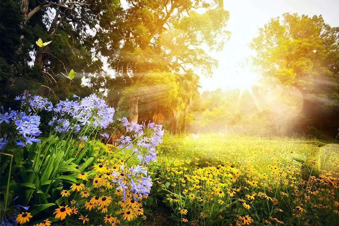 Gartengestaltung Sachsen
