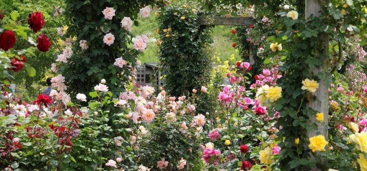 Gartengestaltung Marburg Hessen