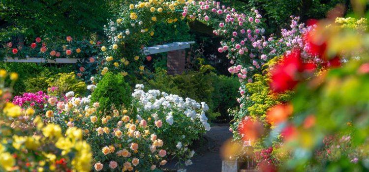 Gartengestaltung Meinerzhagen Nordrhein-Westfalen