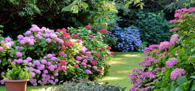 Gartengestaltung Wismar Mecklenburg-Vorpommern