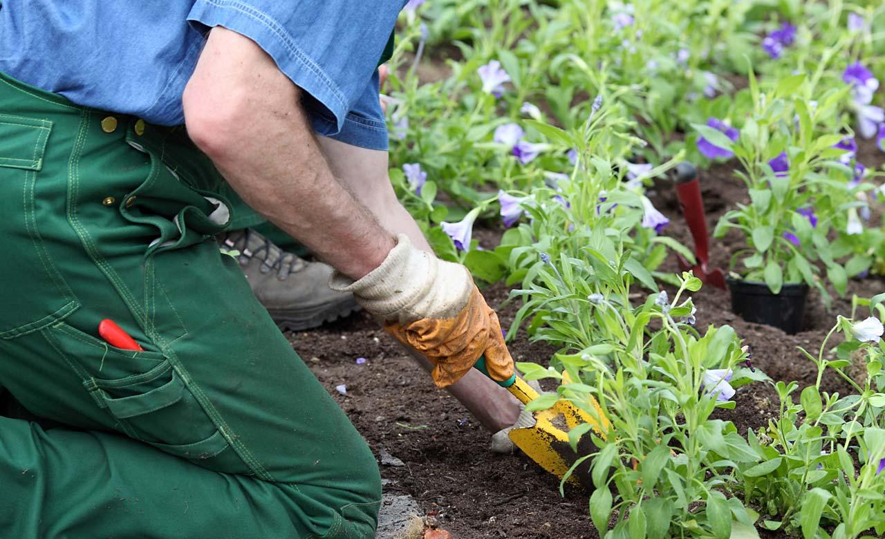 Gartenpflege Dülmen Nordrhein-Westfalen