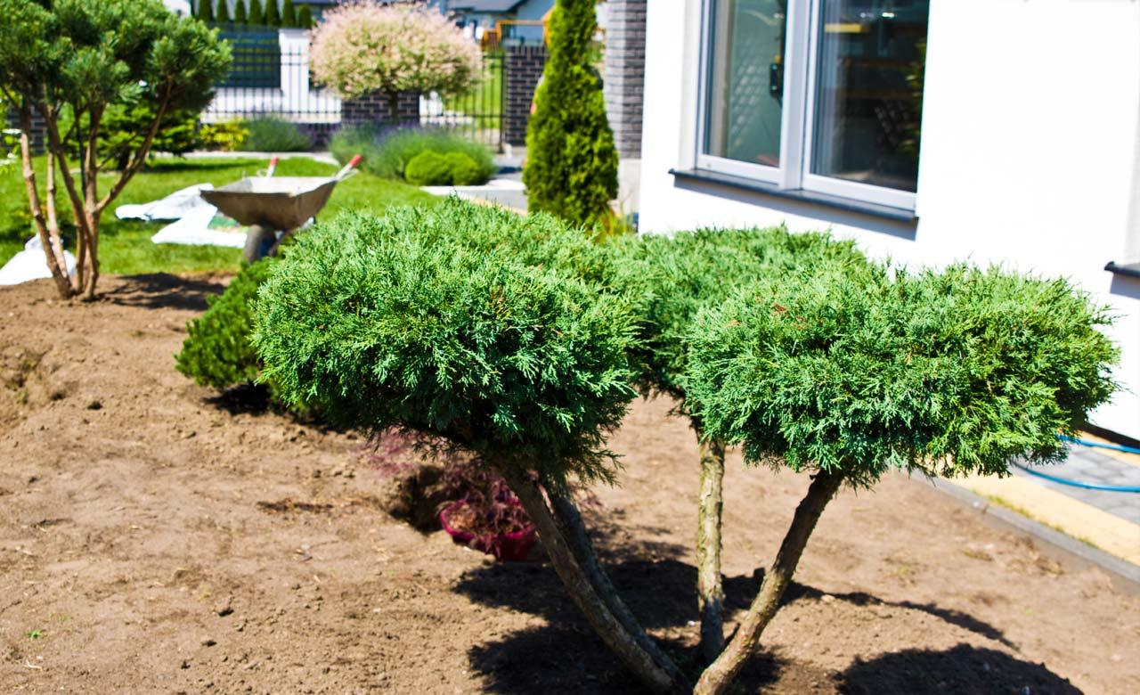 Gartenpflege Netphen Nordrhein-Westfalen