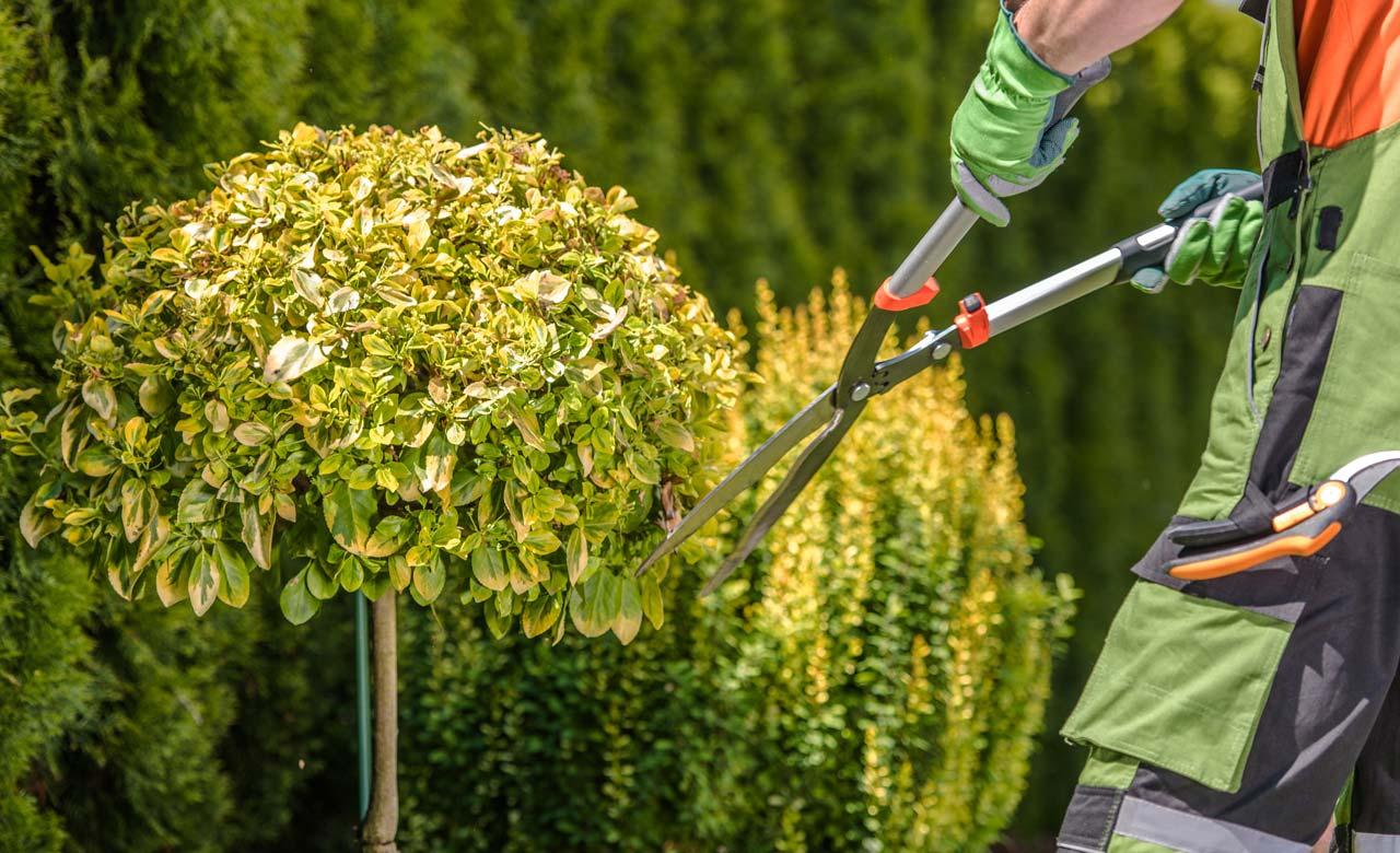 Gartenpflege Rastede Niedersachsen