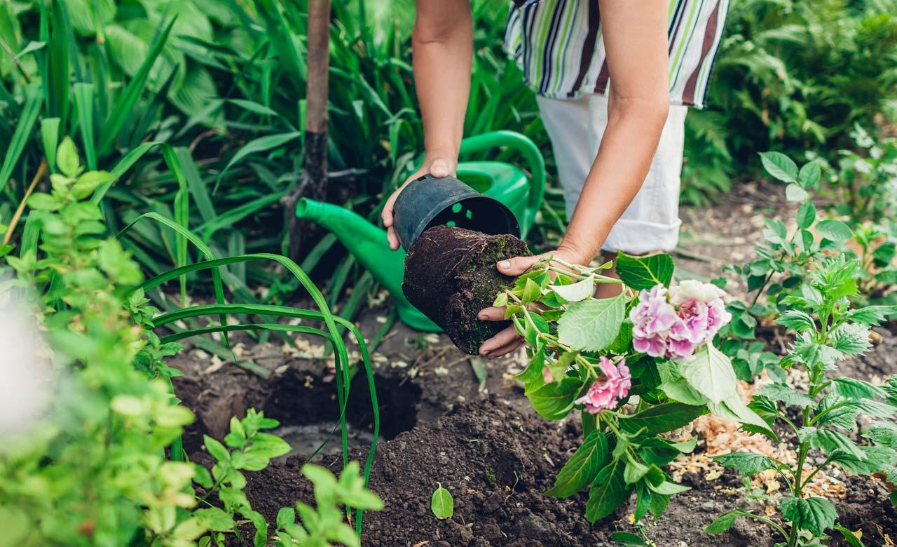 Gartenpflege Wandlitz Brandenburg