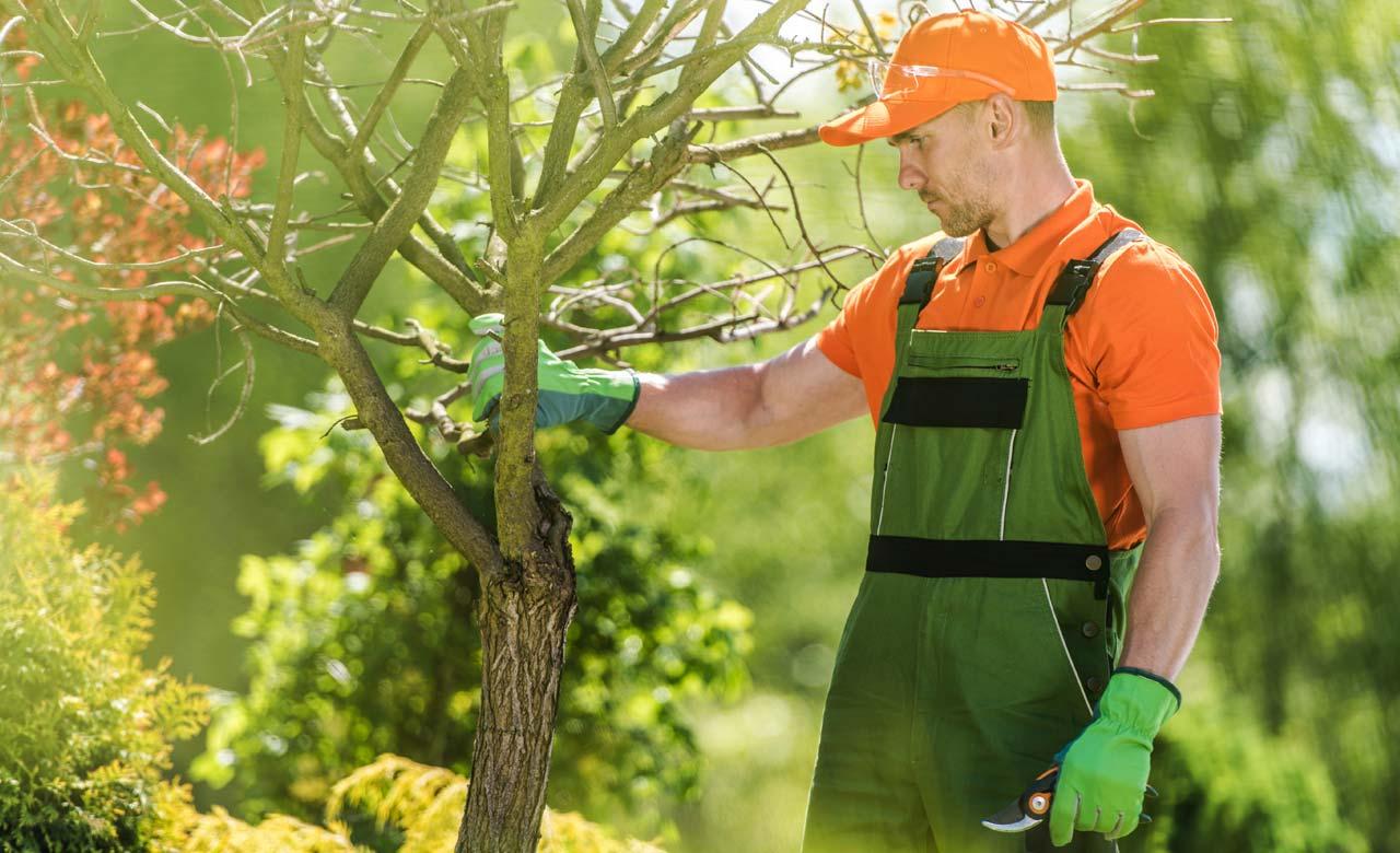 Gartenpflege Werdau Sachsen
