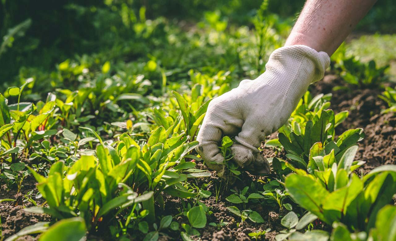 Gartenpflege Wilnsdorf Nordrhein-Westfalen