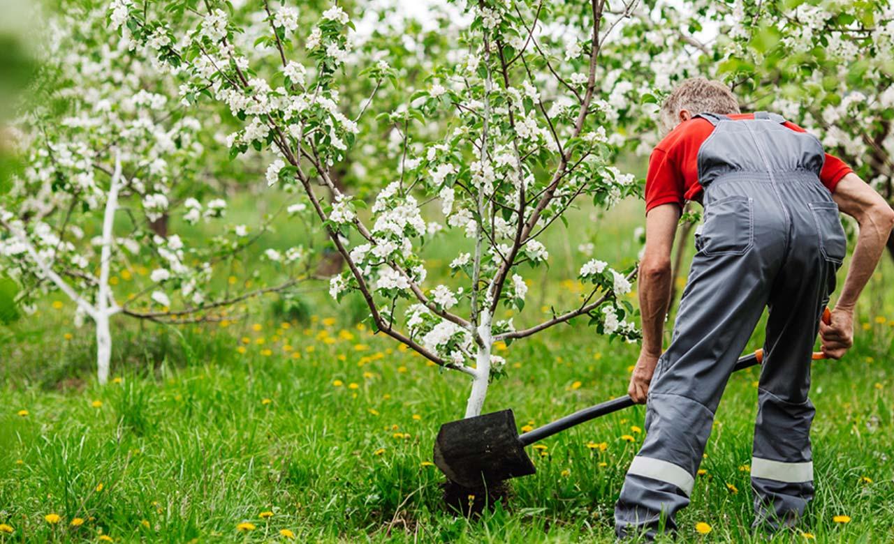 Gartenbauer Lüdenscheid Nordrhein-Westfalen