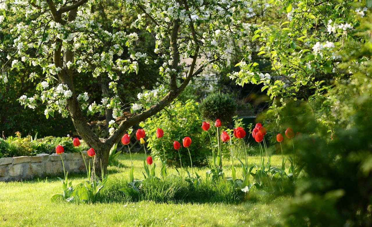 Gartengestaltung Eisenhüttenstadt Brandenburg