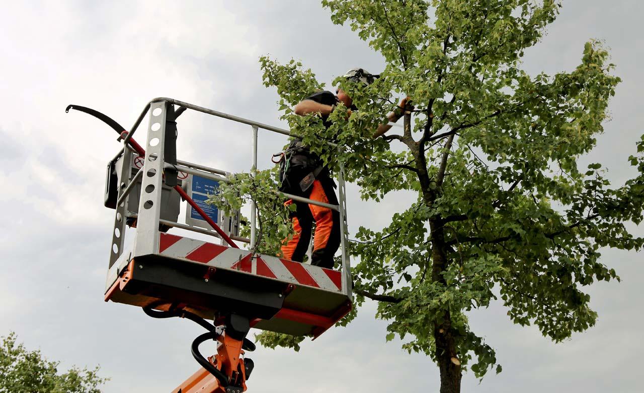 Gartenpflege Dortmund Nordrhein-Westfalen