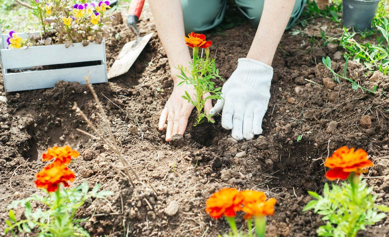Gartenpflege Lengerich Nordrhein-Westfalen