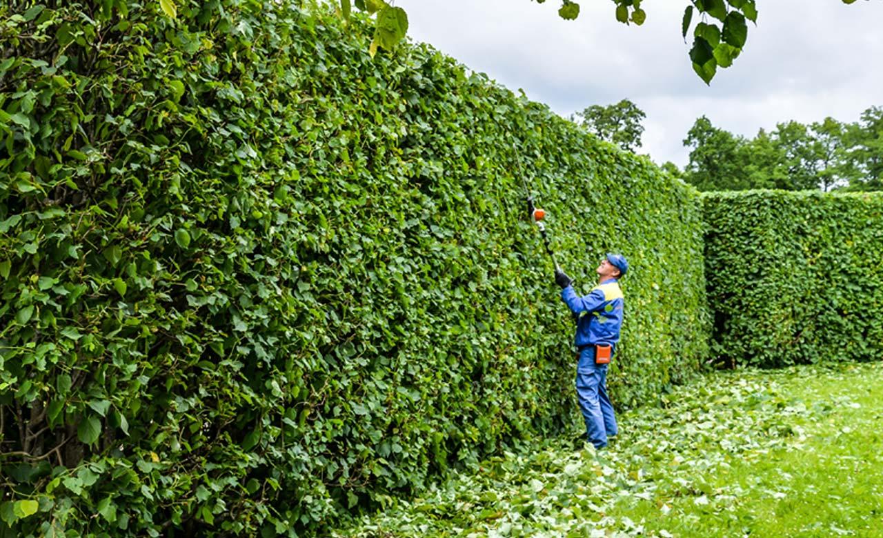 Gartenpflege München Bayern