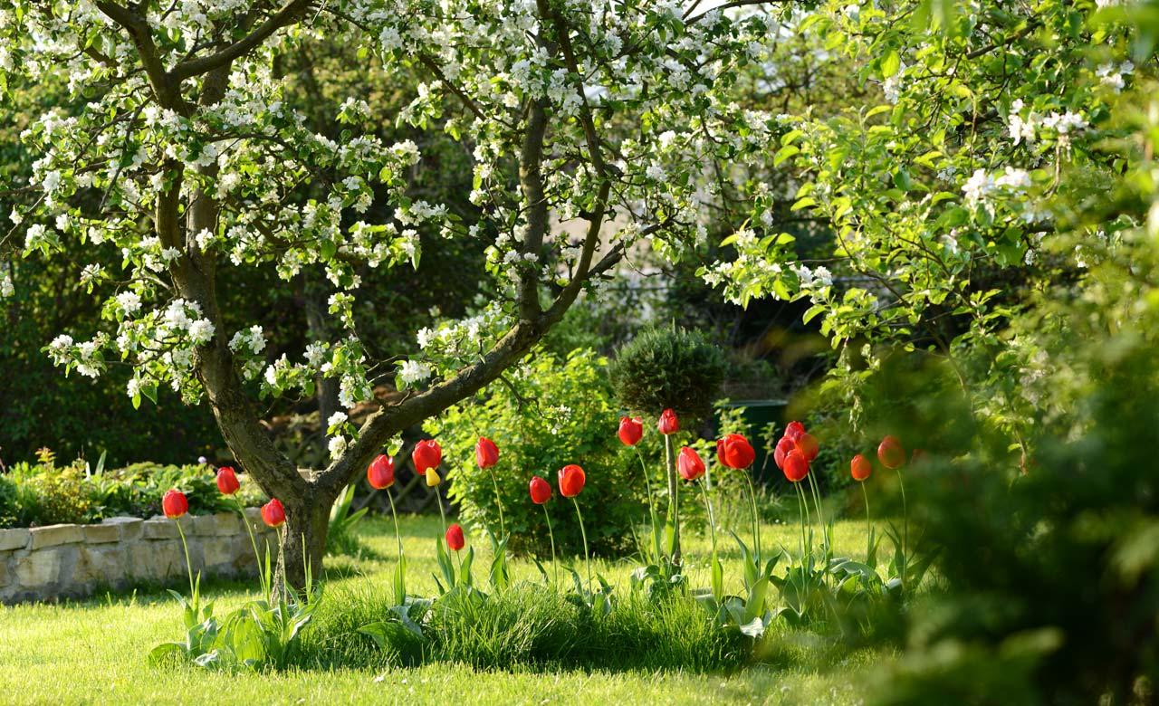 Gartenbau Edewecht Niedersachsen