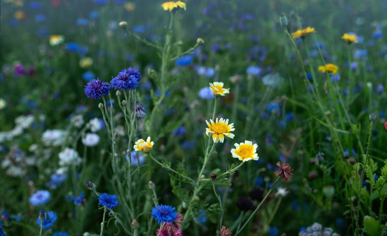 Gartengestaltung Emmerich am Rhein Nordrhein-Westfalen