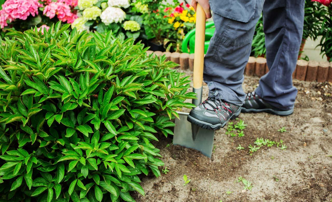 Gartenpflege Goch Nordrhein-Westfalen