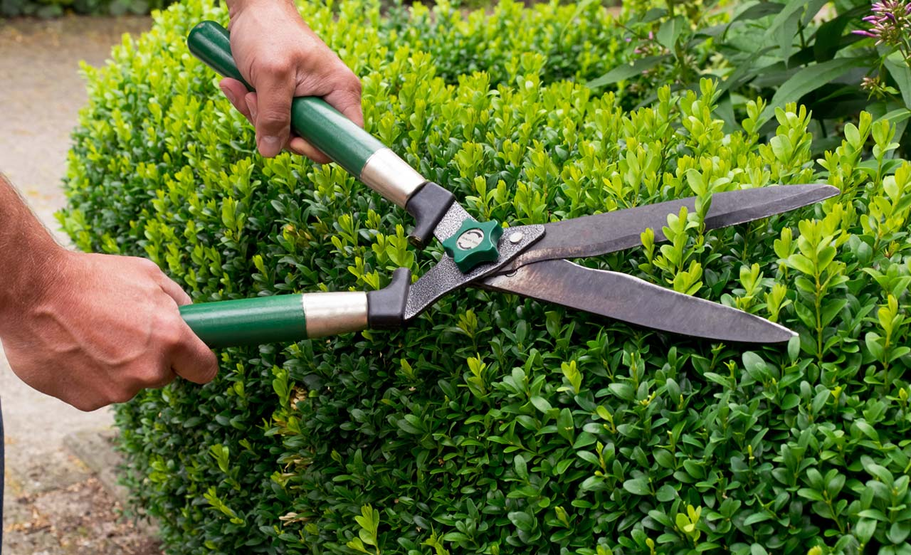 Gartenpflege Hamminkeln Nordrhein-Westfalen