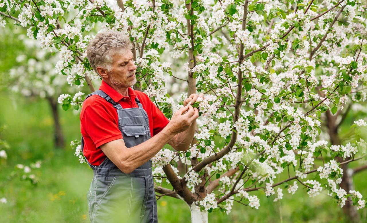 Gartenpflege Eschborn Hessen
