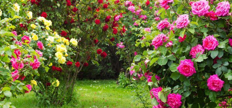 Gartengestaltung Kelkheim Hessen
