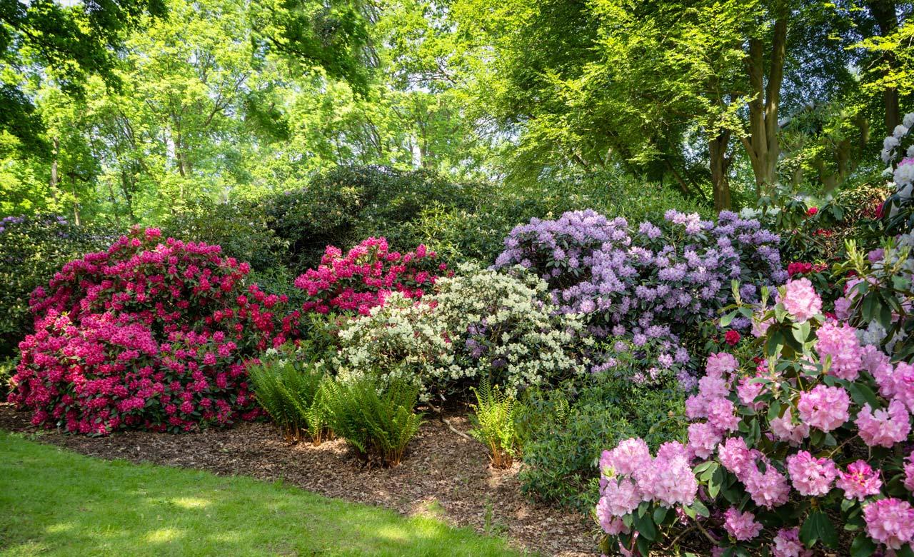 Gartengestaltung Meißen Sachsen