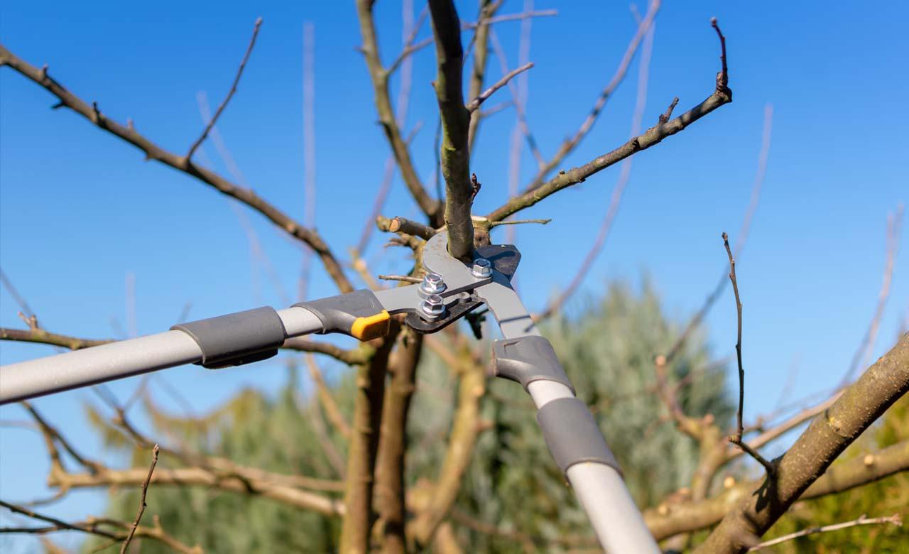 Gartenpflege Cuxhaven Niedersachsen
