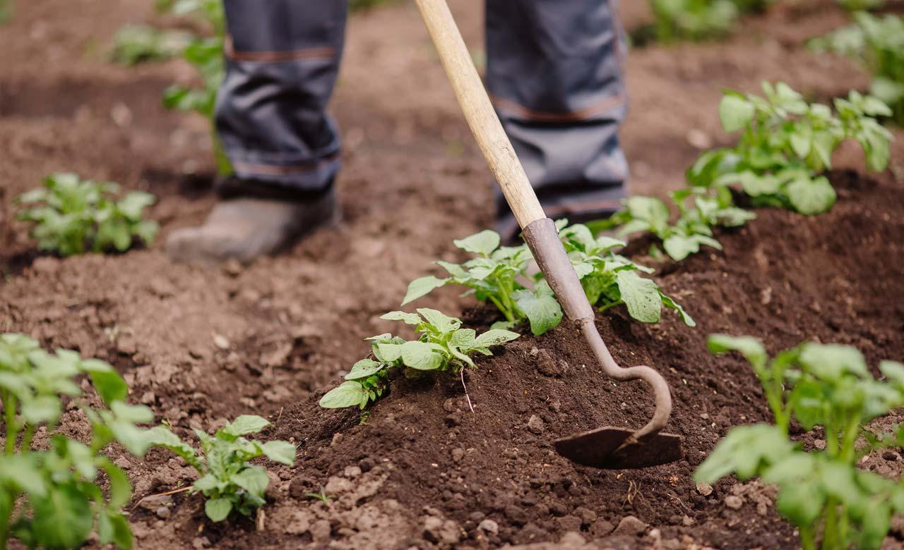 Gartenpflege Hemer Nordrhein-Westfalen