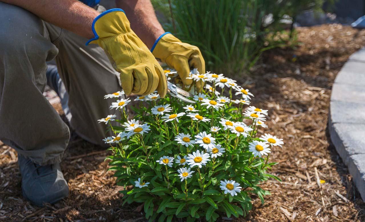 Gartenpflege Herford Nordrhein-Westfalen
