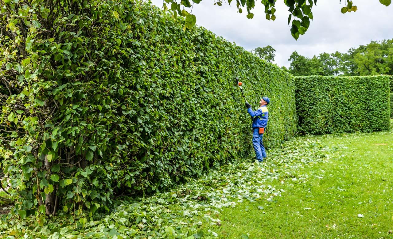 Gartenpflege Hofheim am Taunus Hessen