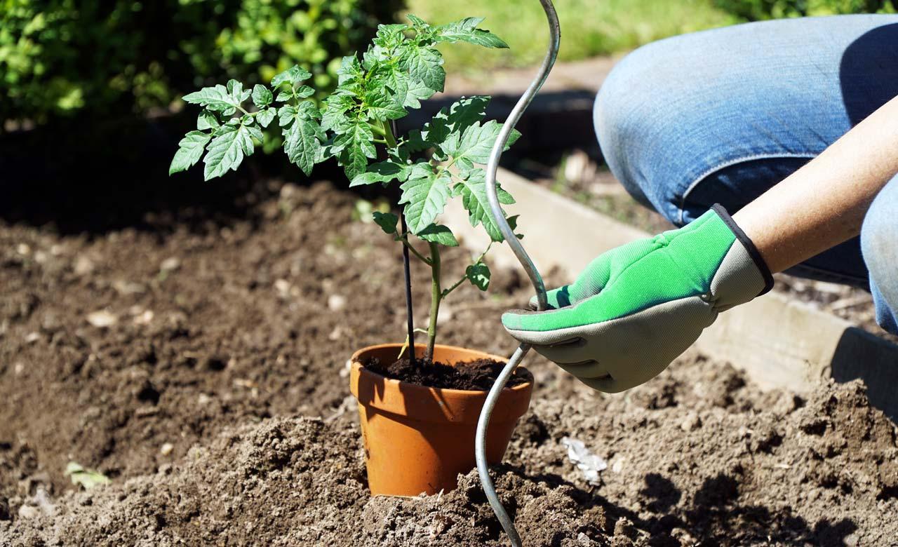 Gartenpflege Meißen Sachsen