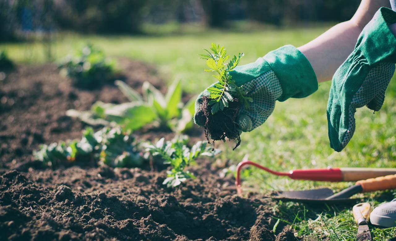 Gartenpflege Senden Bayern