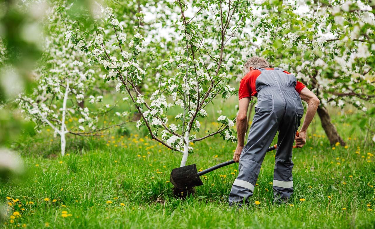 Gartenbauer Schwerte Nordrhein-Westfalen