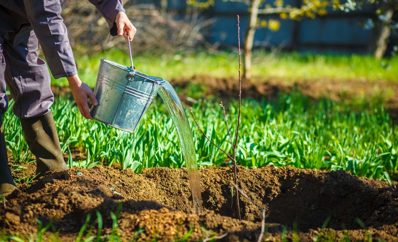 Gartenpflege Attendorn Nordrhein-Westfalen