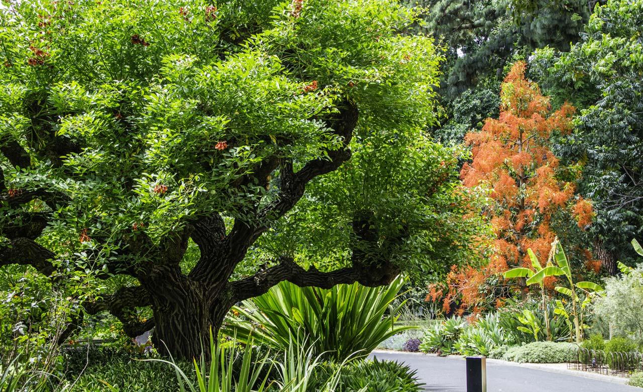 Gartengestaltung Langen Hessen