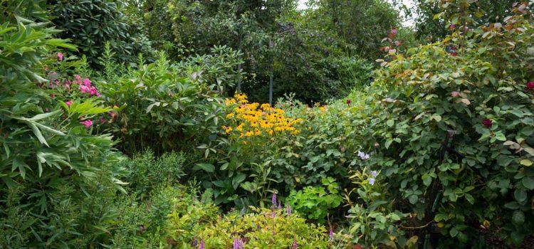Gartengestaltung Lemgo Nordrhein-Westfalen