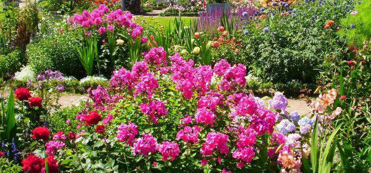 Gartengestaltung Radebeul Sachsen