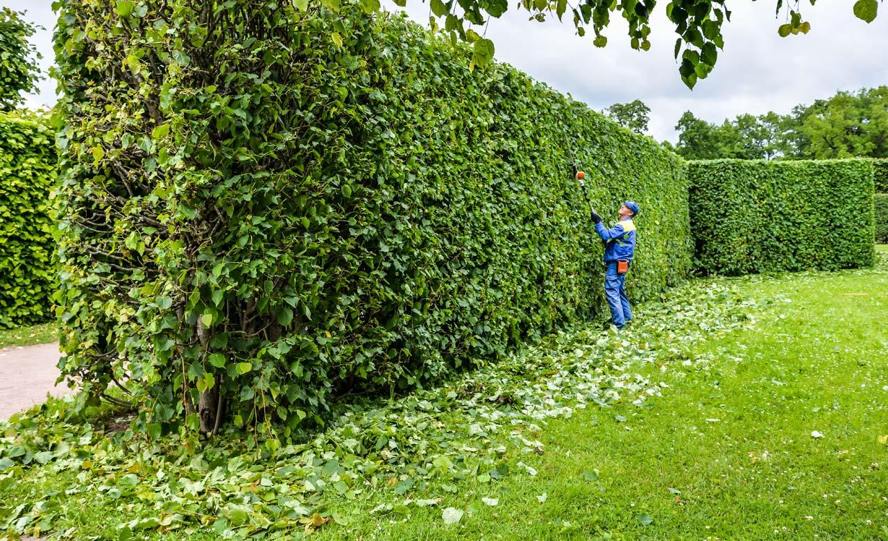 Gartenpflege Lemgo Nordrhein-Westfalen