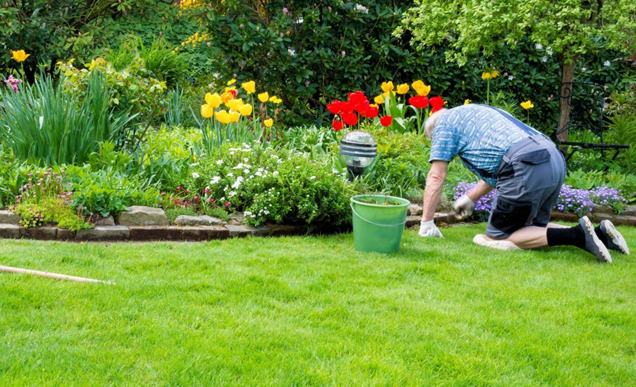 Gartenpflege Löhne Nordrhein-Westfalen