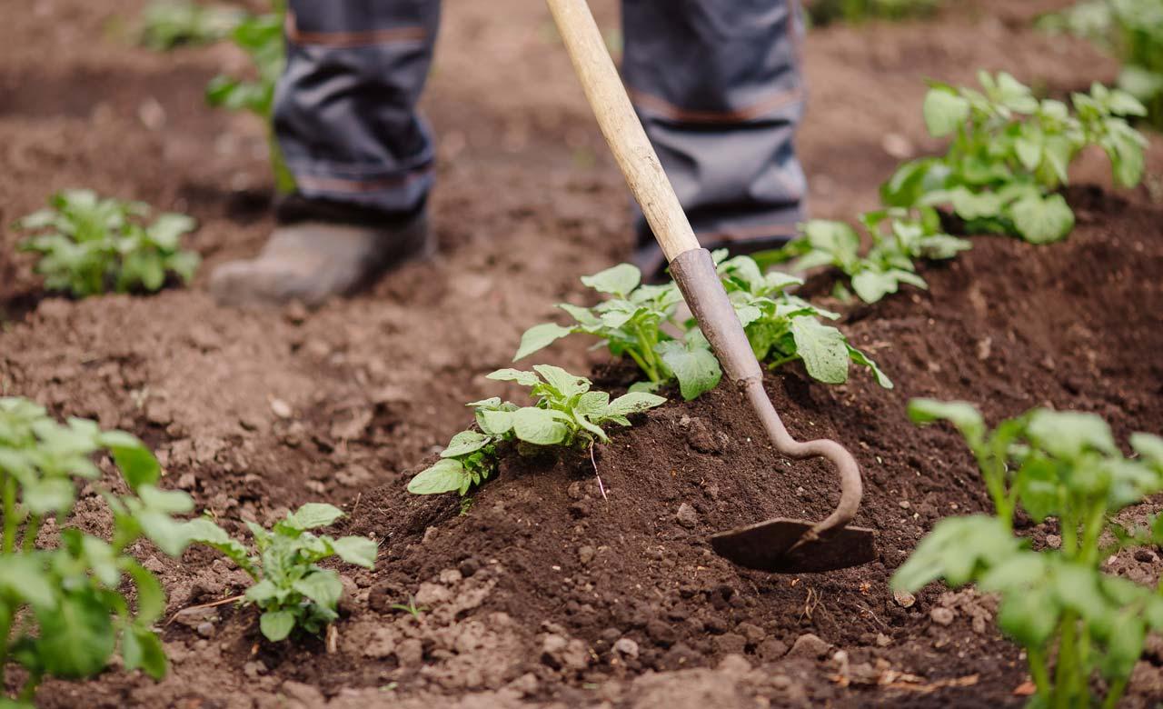 Gartenpflege Sankt Ingbert Saarland