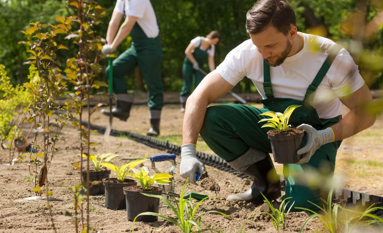 Gartenbau Vechta Niedersachsen