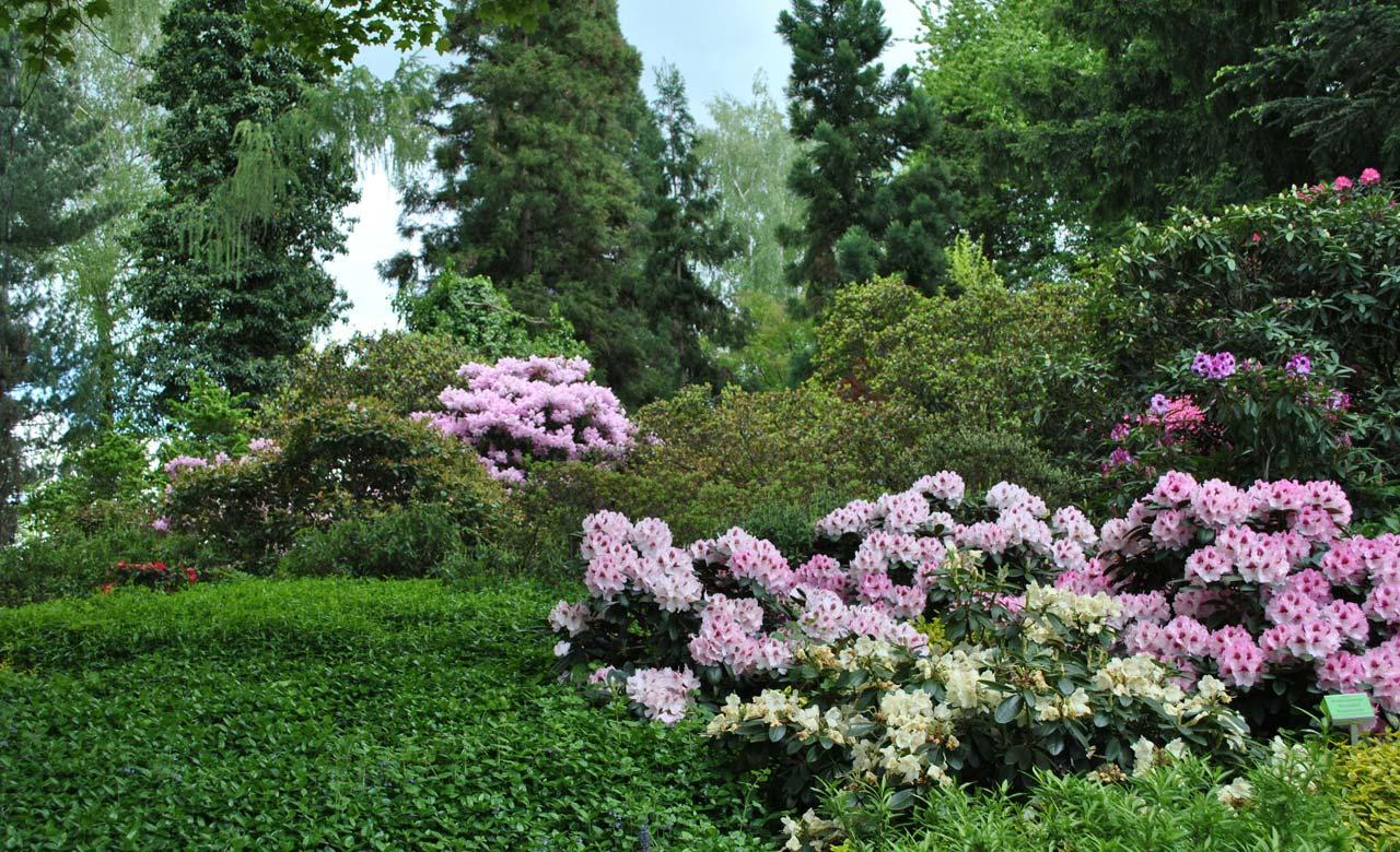 Gartengestaltung Suhl Thüringen
