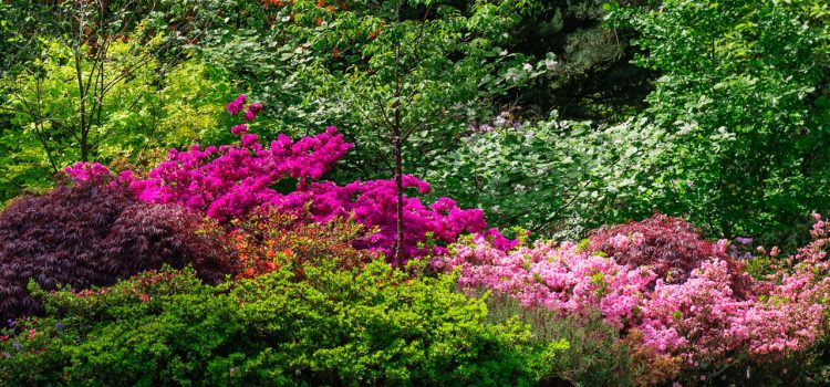 Gartengestaltung Völklingen Saarland