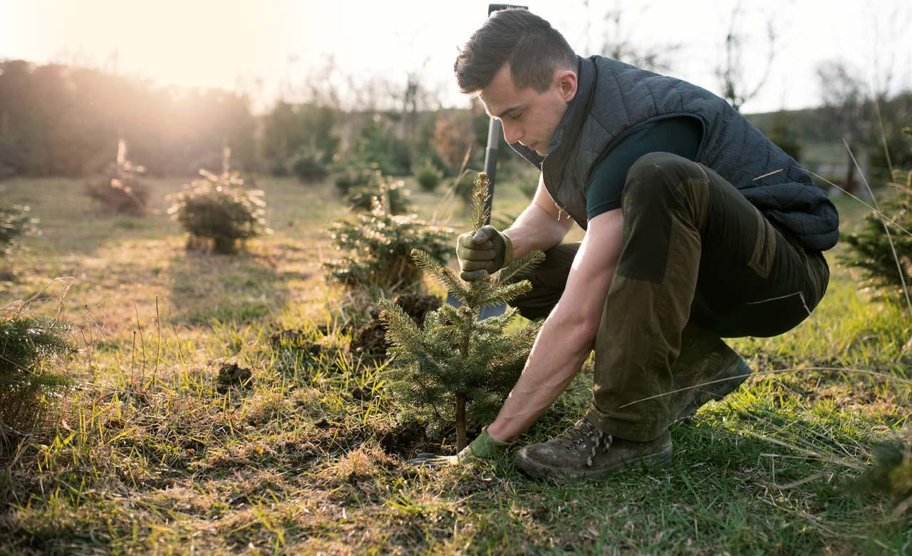Gartenpflege Völklingen Saarland