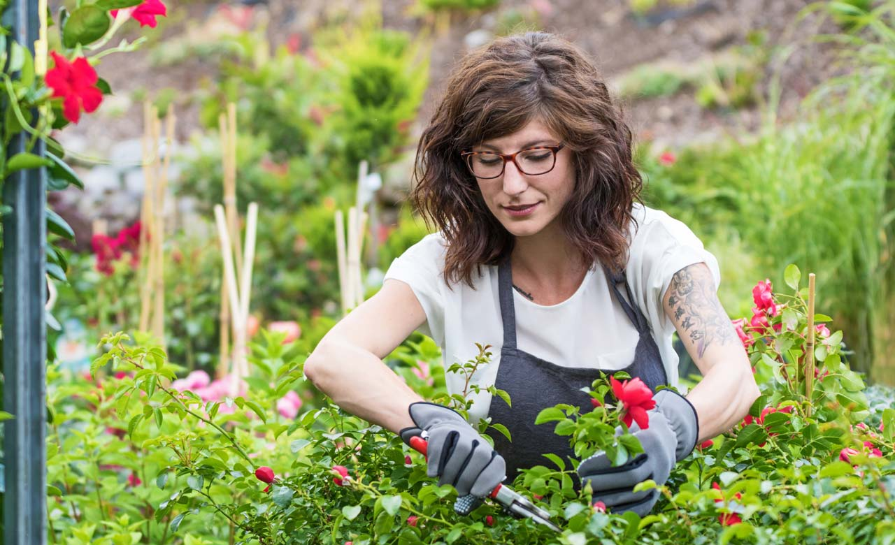 Gartenpflege Zittau Sachsen